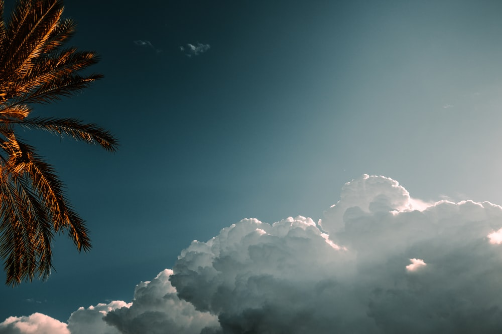 low-angle photography of coconut tree and white clouds