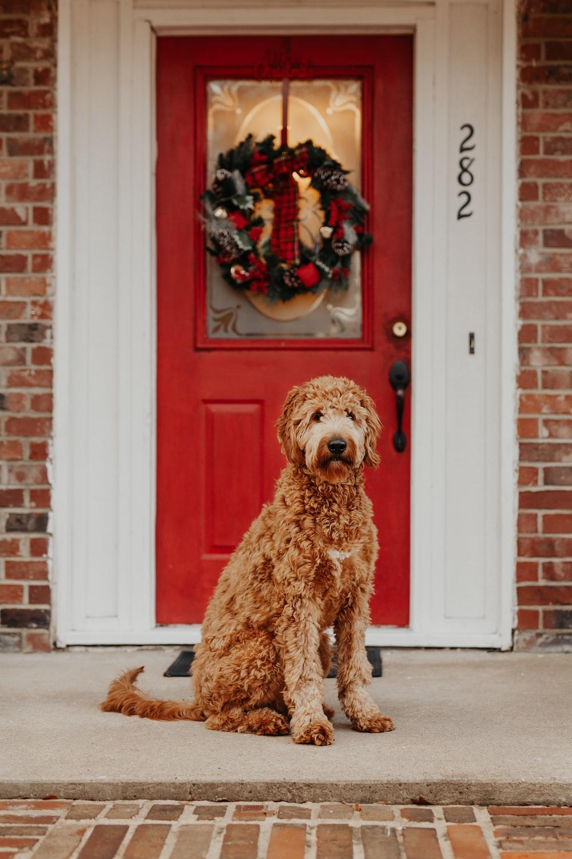 dog sitting in front of closed door