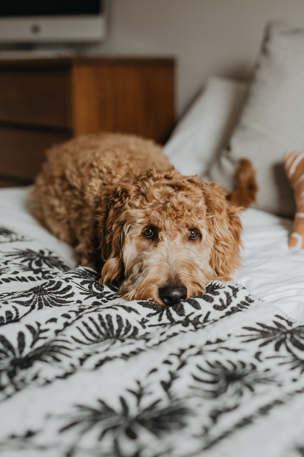 dog laying on bed