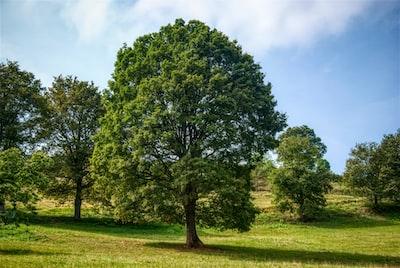 The marijuana bud like tree.