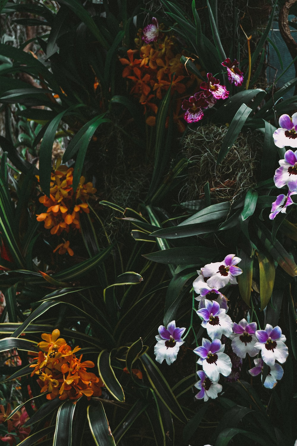 green, yellow, and purple flowers