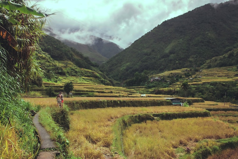 mountains and rice field