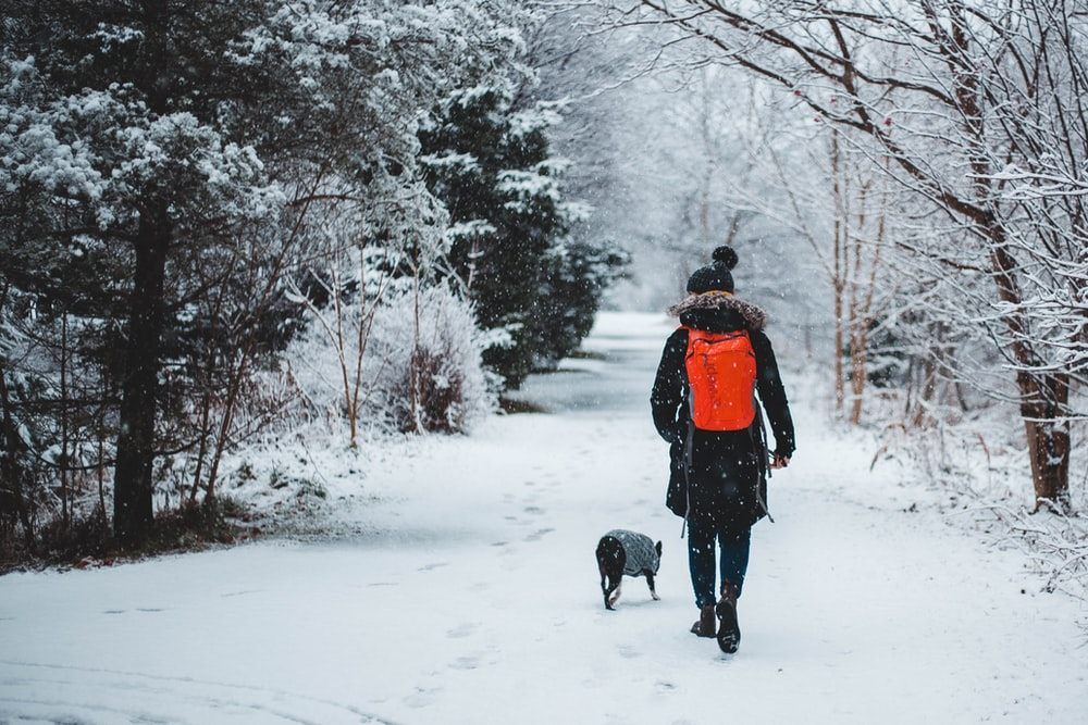person walking with dog in the middle of snowy forest