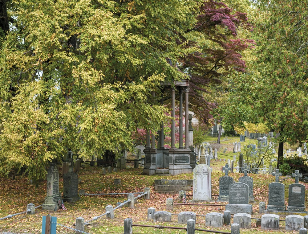 trees beside graveyard during daytime