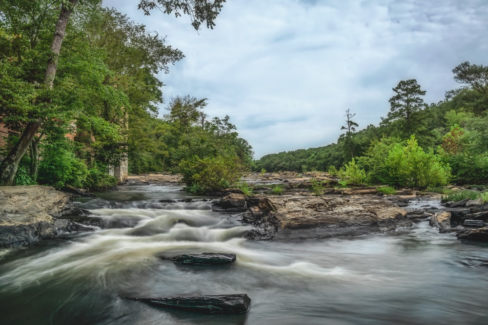 view photography of river and trees during daytime