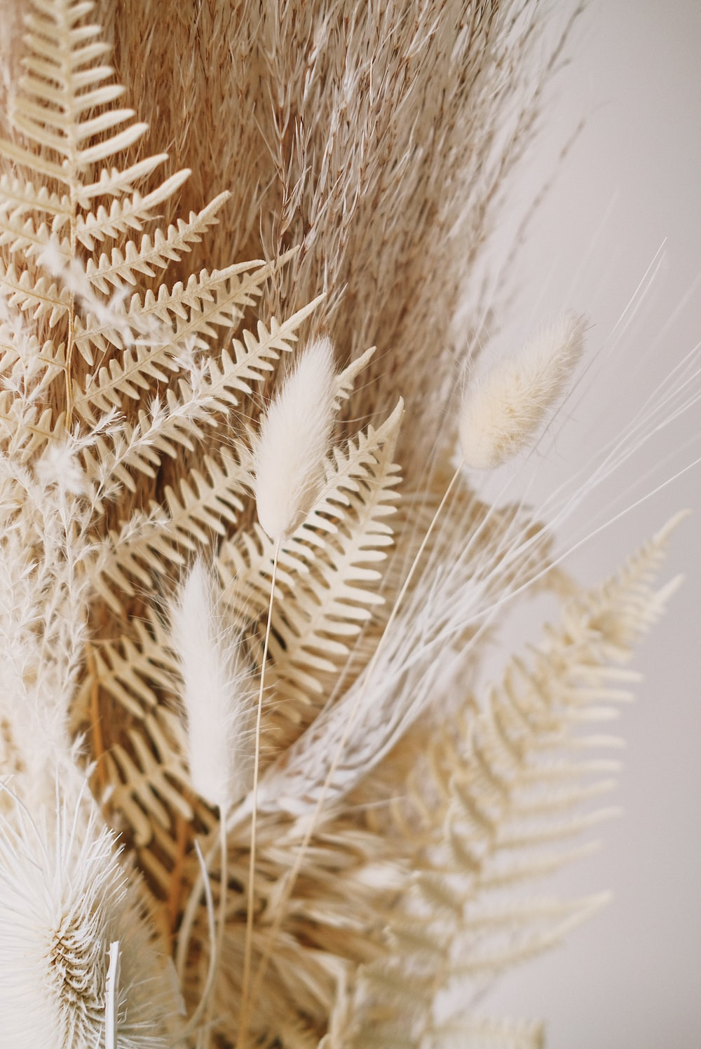 brown fern plant