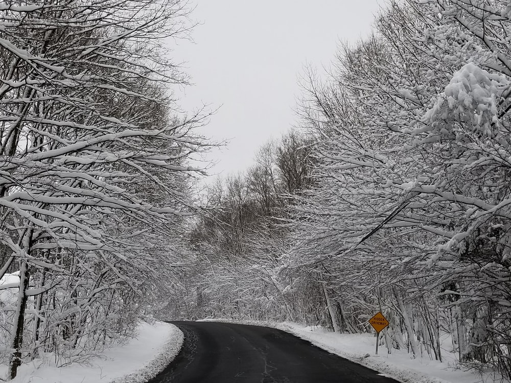 black road surrounded with white trees