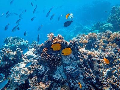school of fish beside coral ]