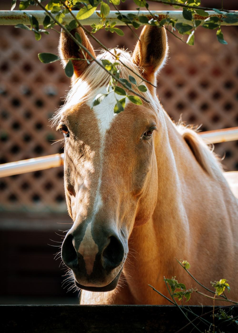 brown horse in closeup photography