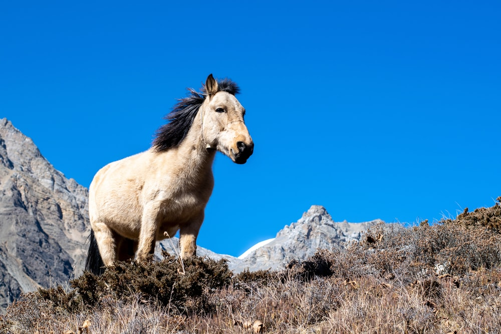pony on top of the mountain under blue sky
