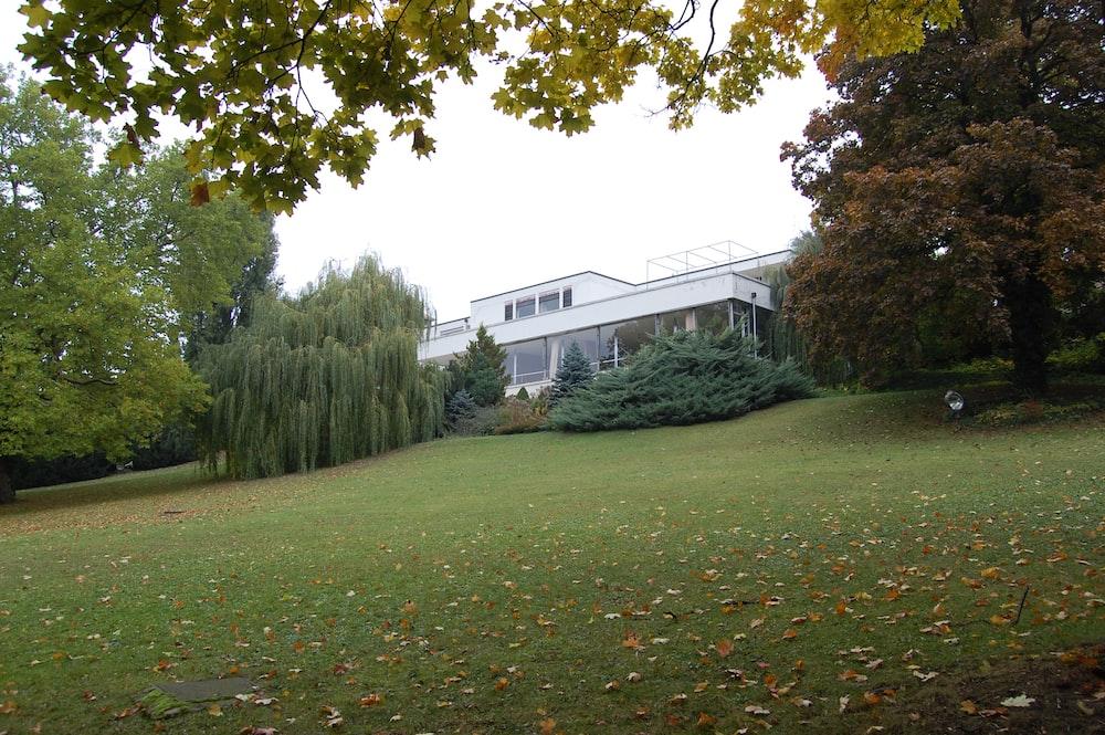 trees beside houses