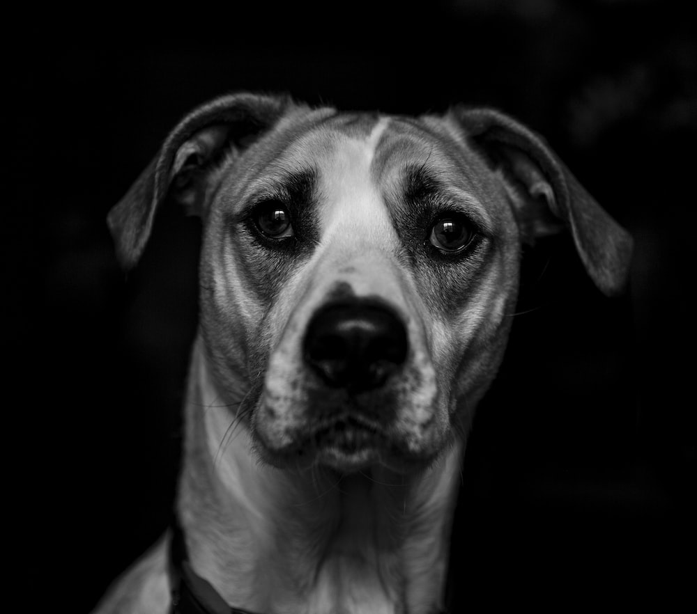 portrait photograph of white and gray dog