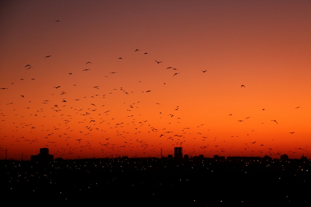 photography of birds flew during nightime