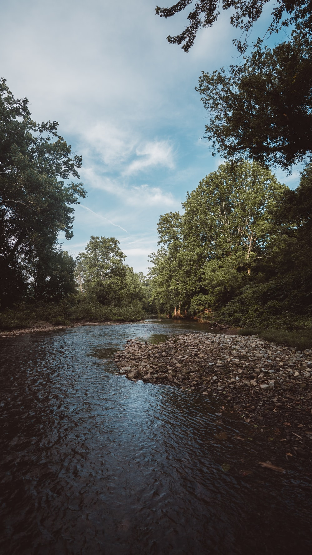 view photography of river and trees