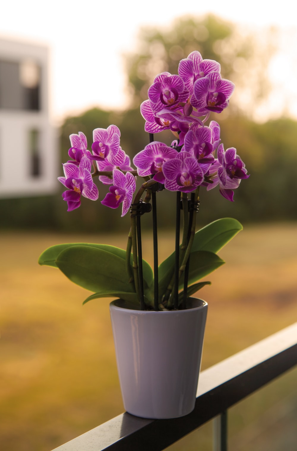 selective focus photography of purple moth orchids during daytime