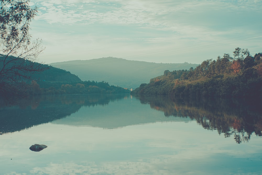 photography of body of water and trees during daytime