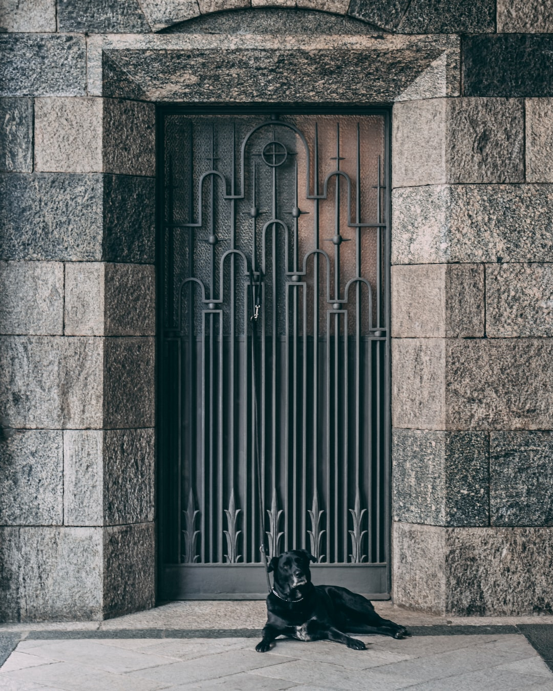 Dog guarding old gate