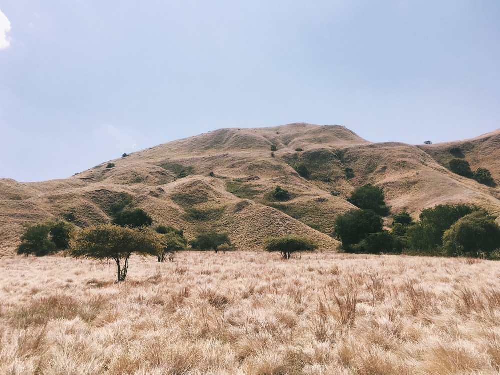 view photography of brown grass and mountain during daytime
