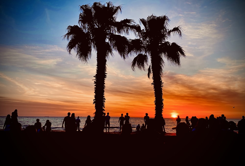 silhouette photography of palm trees