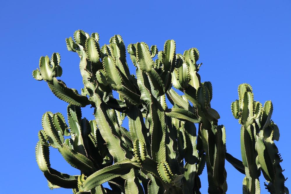 green euphorbia at daytime