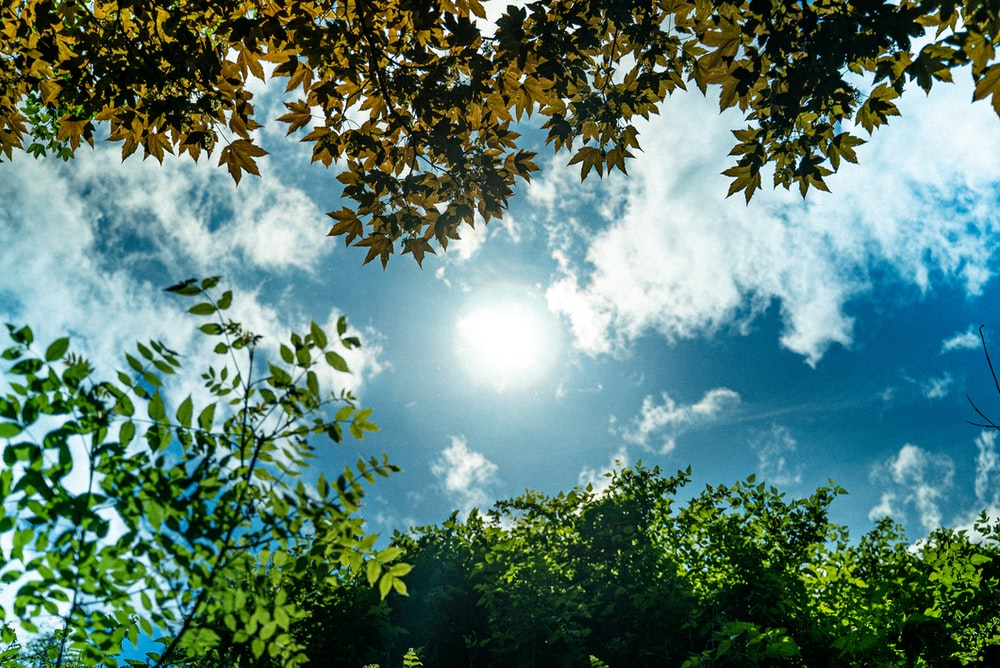 green leaf trees at daytime