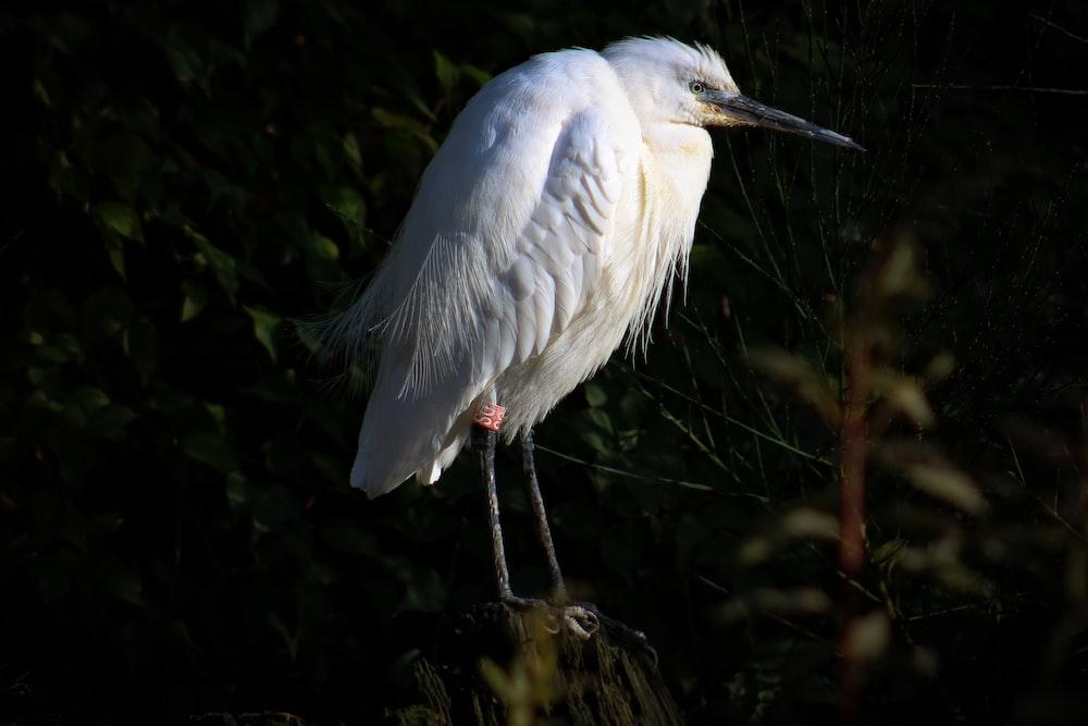white bird photograph