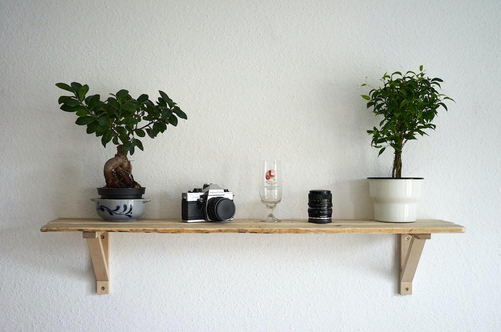 plants, camera, and camera lens on shelf