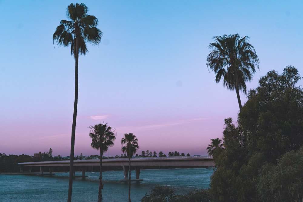 palm trees near body of water during daytime