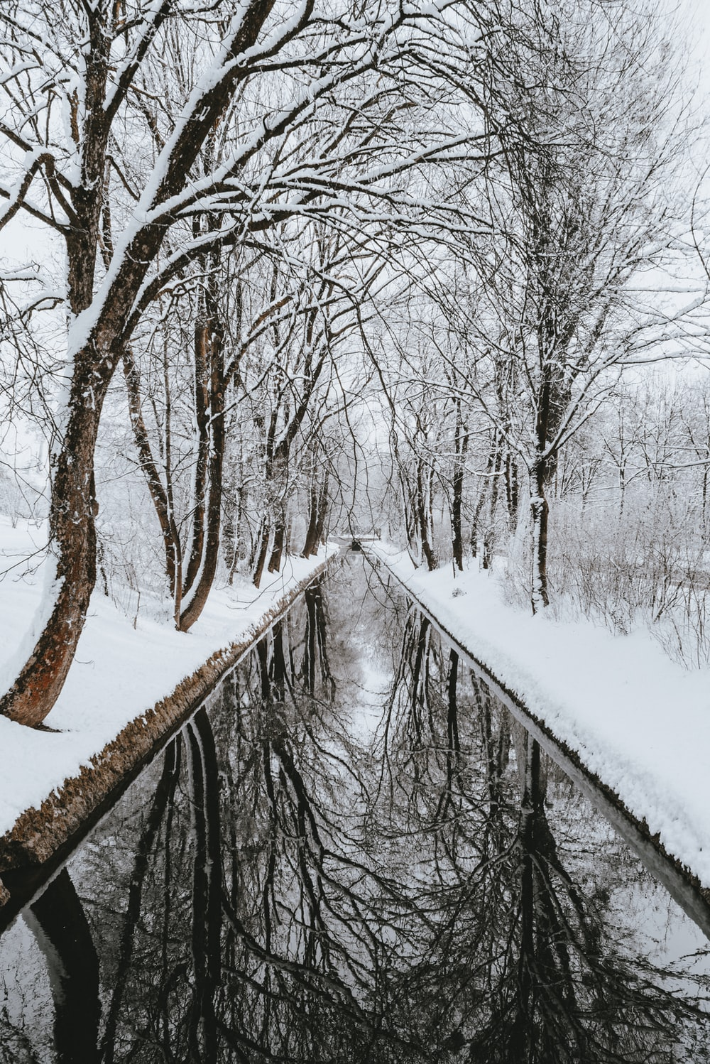 wet pathway between trees covered with snow