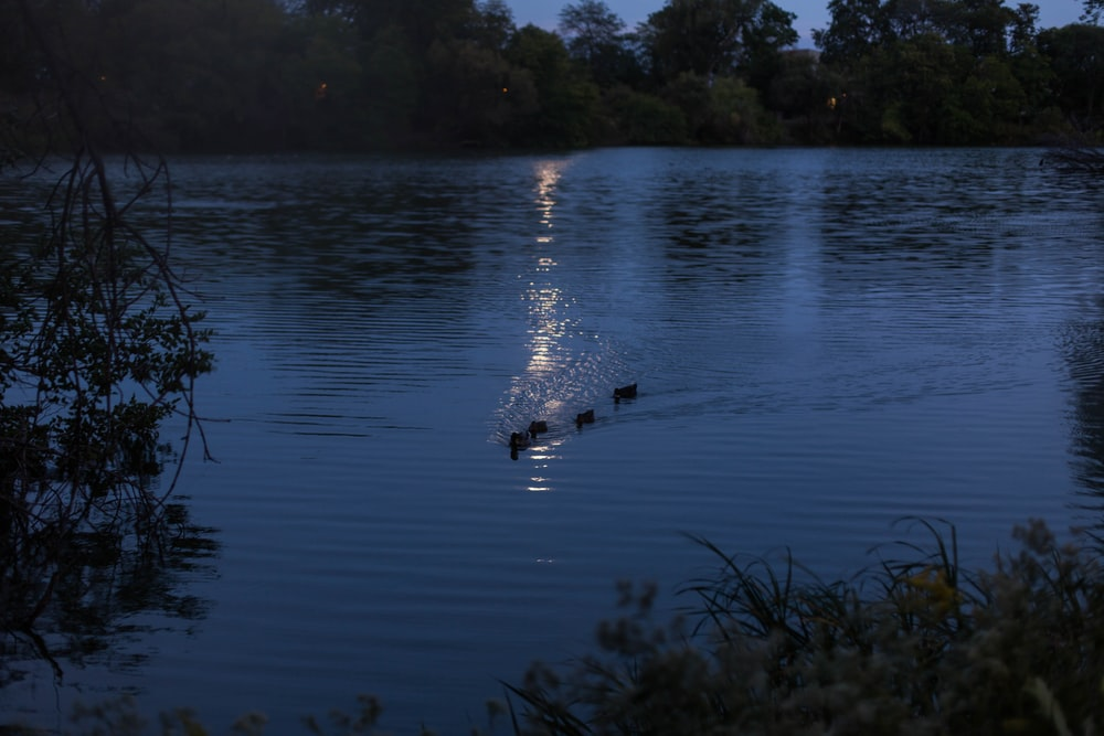 body of water surrounded by trees at night