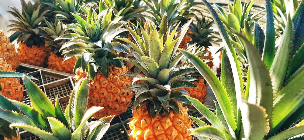 yellow pineapple fruits