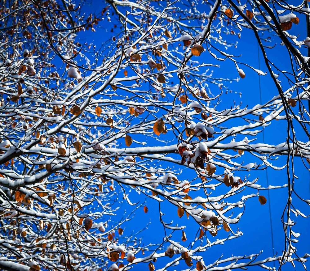 snow covering tree branches under blue sky