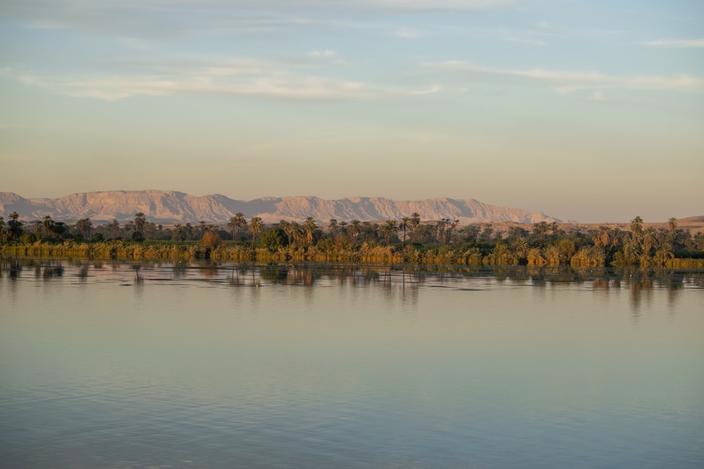 brown trees beside body of water during golden hour