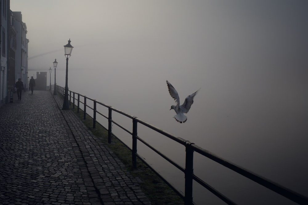 greyscale photography of bird
