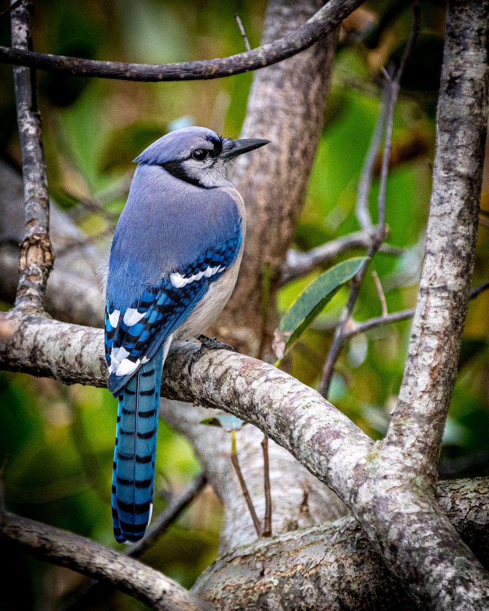 gray bird on branch during daytime