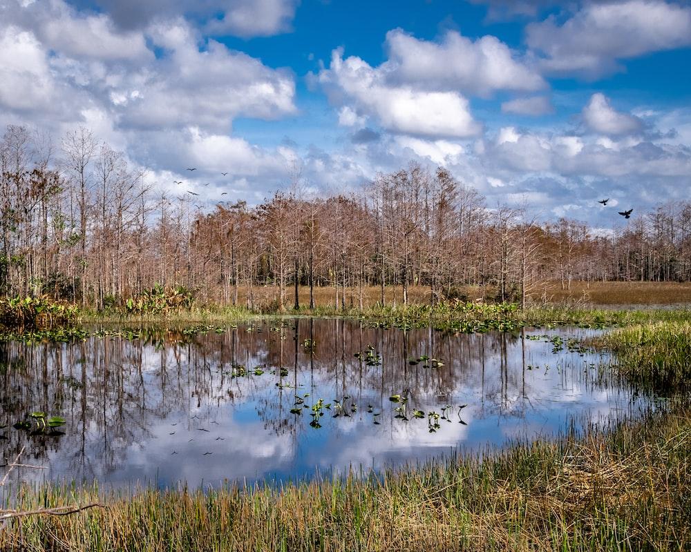 lake beside leafless trees
