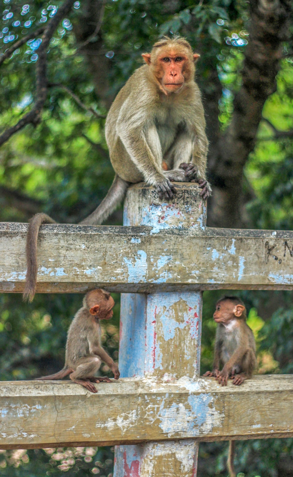 gray monkey on concrete post