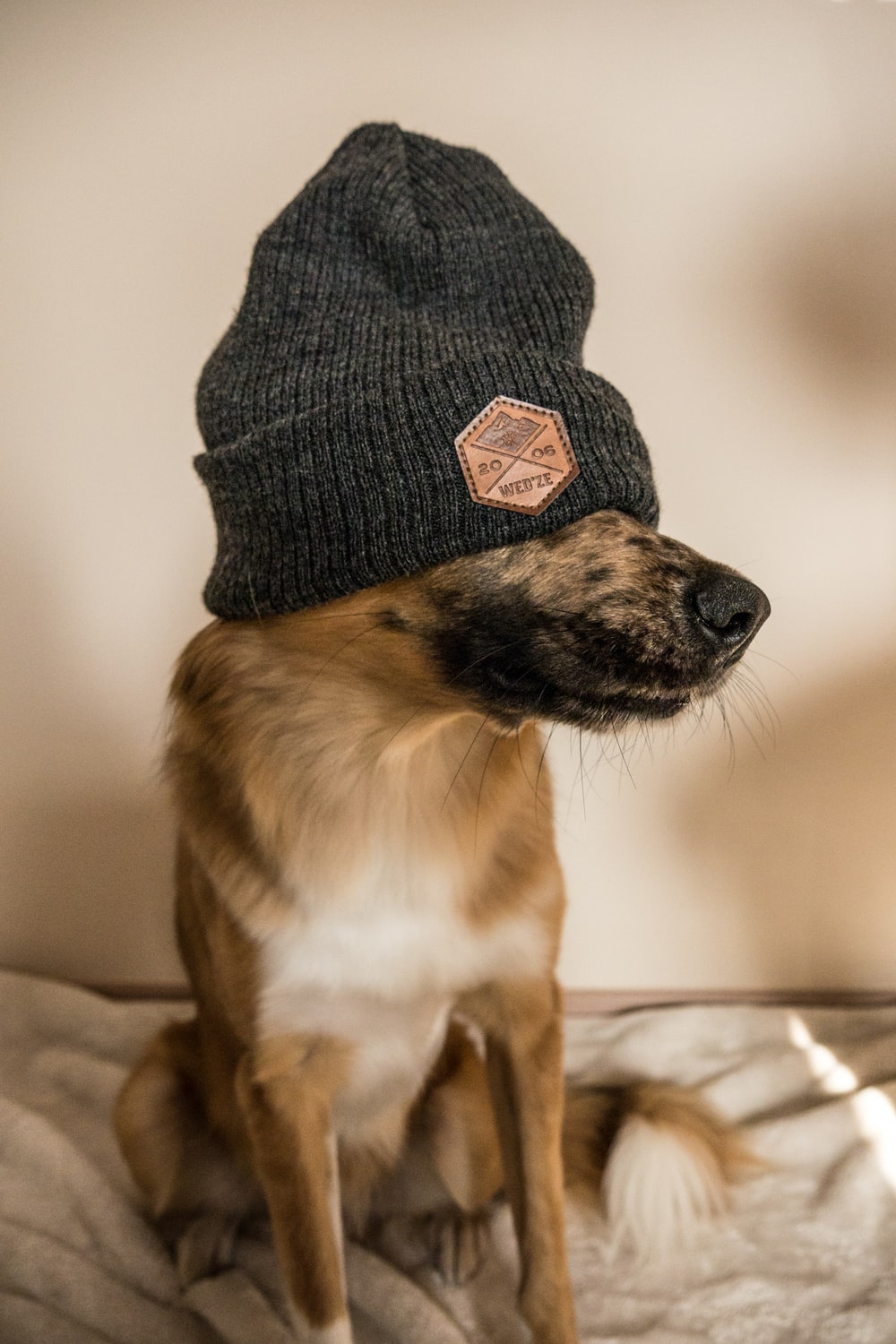 shallow focus photo of long-coated dog wearing black knit cap