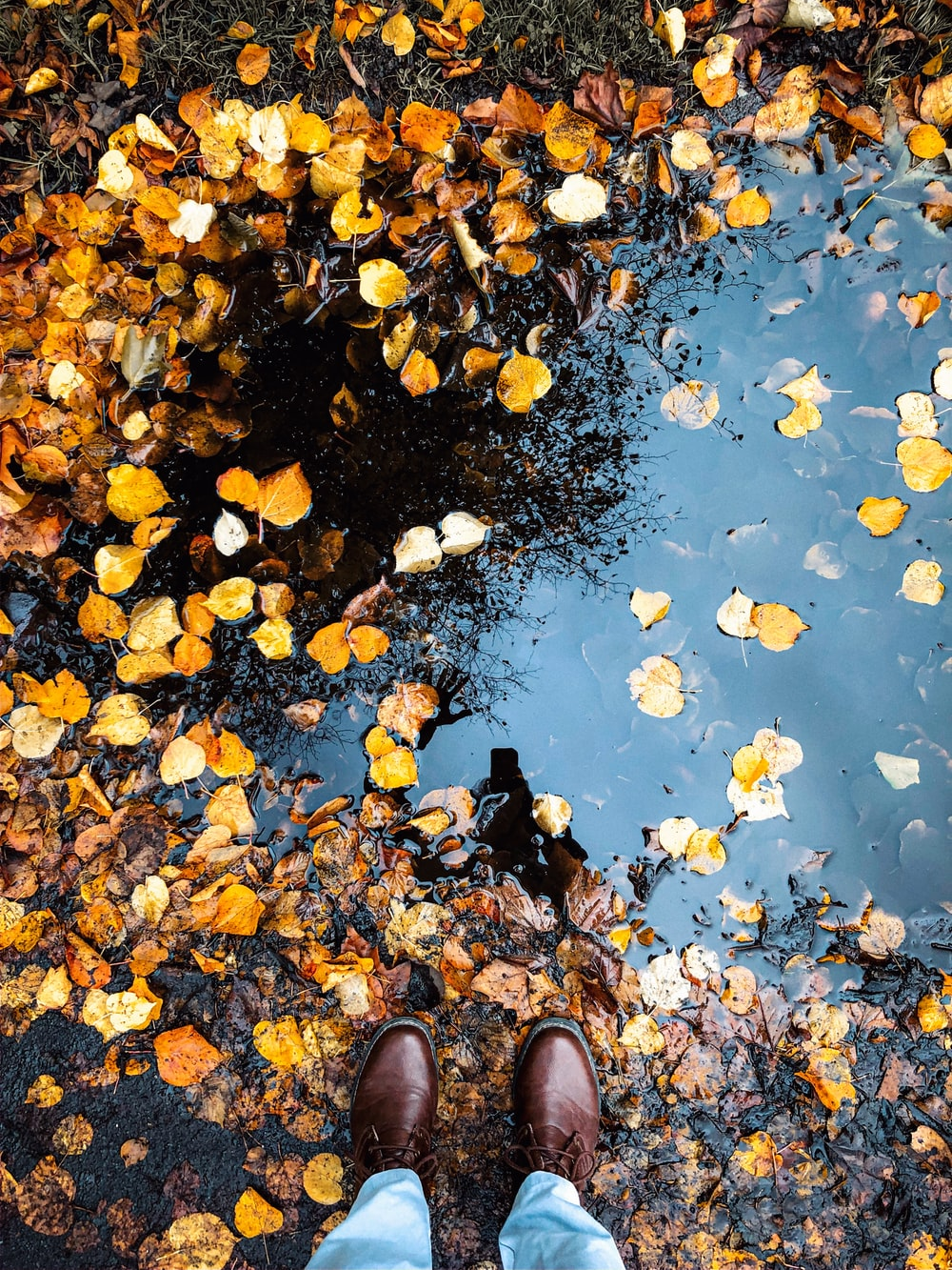 brown leaves on water during daytime
