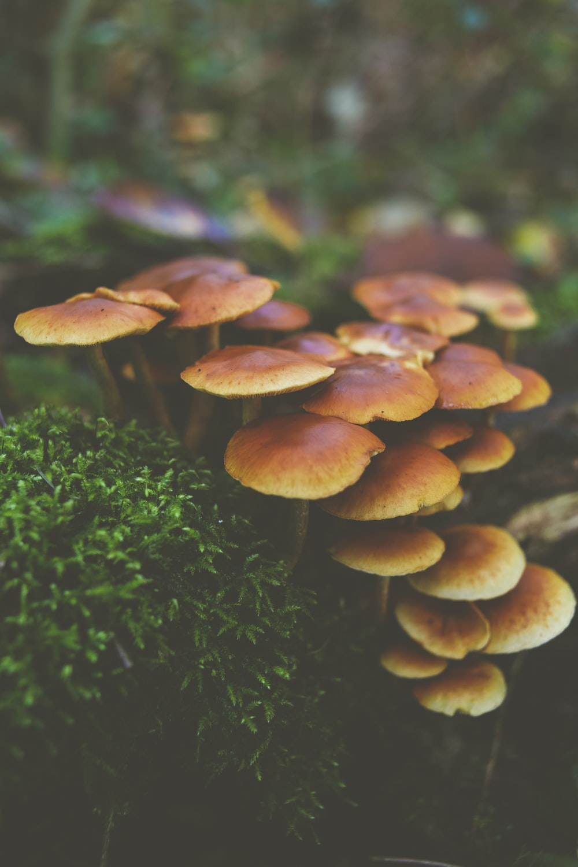 shallow focus photo of brown mushrooms