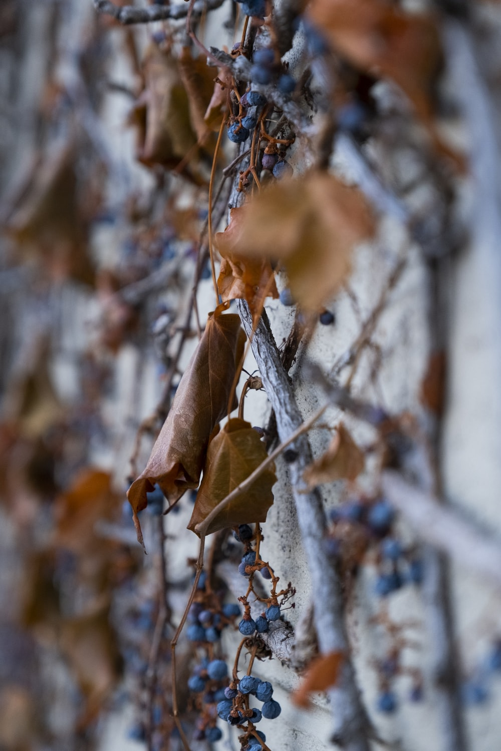 macro photography of brown leaves