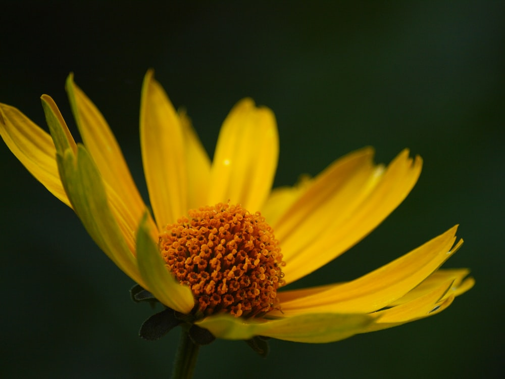 yellow petaled flower close up photo