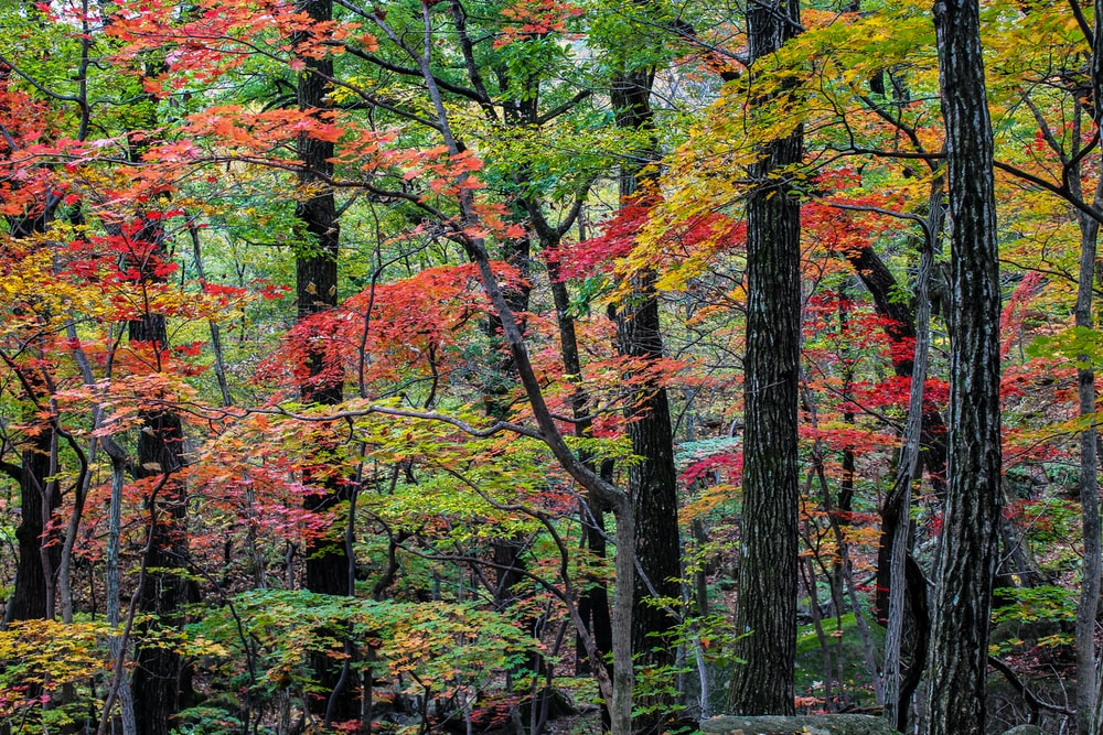 red, green, and yellow leafed trees
