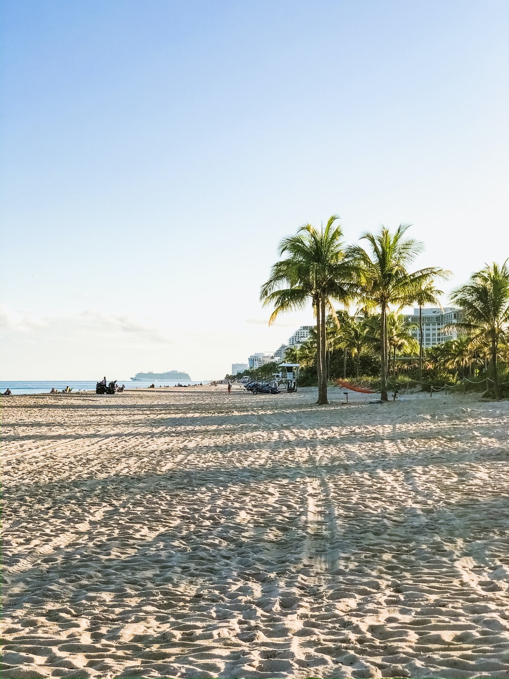 coconut trees on sand