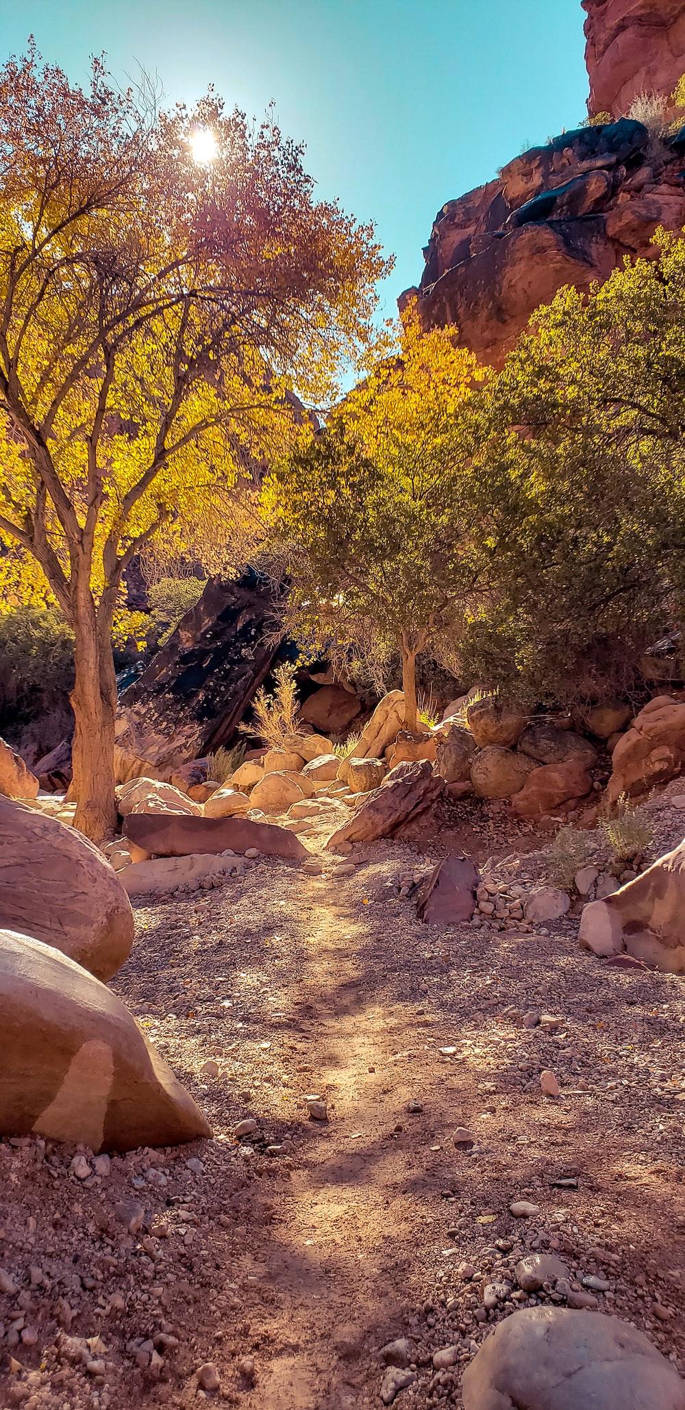 green-leafed trees near boulder rocks