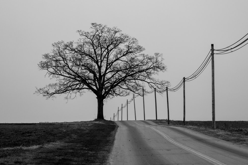 grayscale photography of lonely tree near road