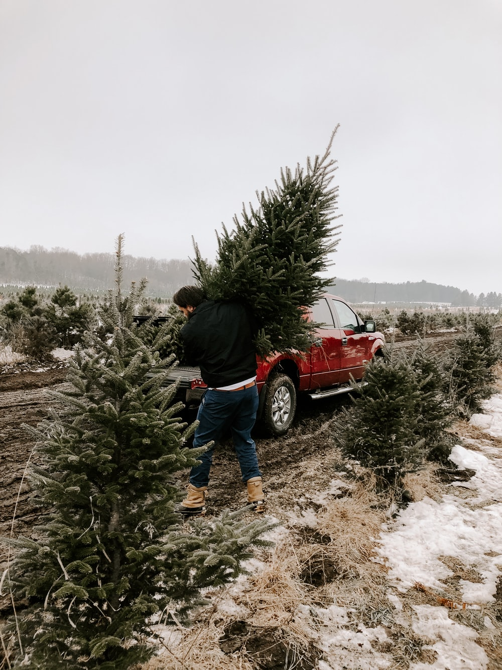 man carrying christmas tree