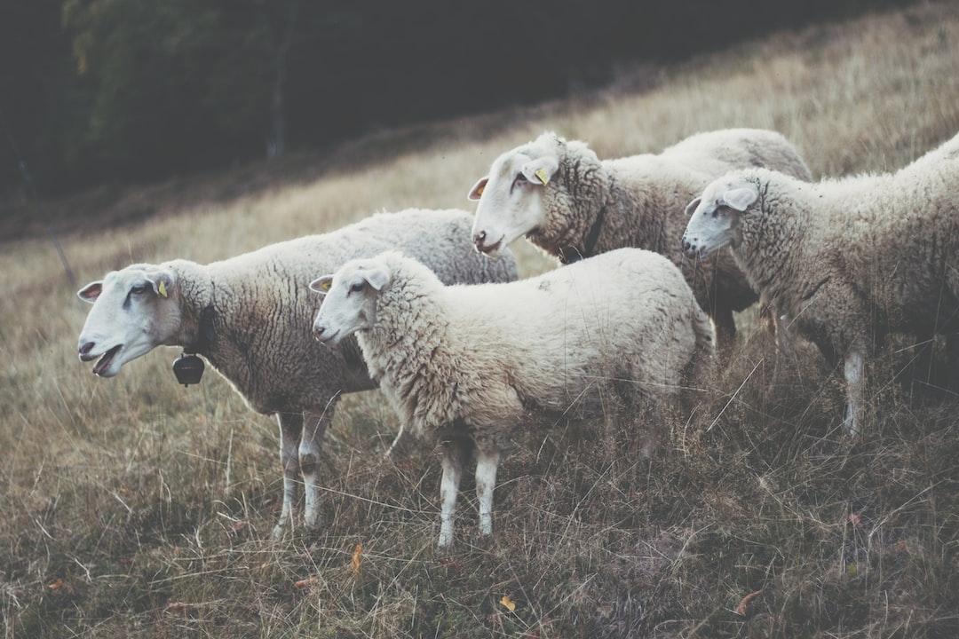 Livestock of a farm
