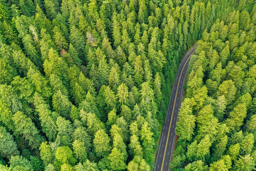 aerial photography of road and forest