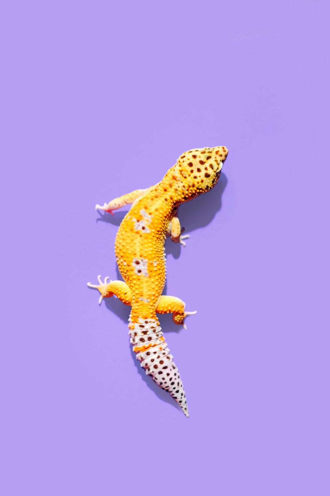 Pet Leopard Gecko